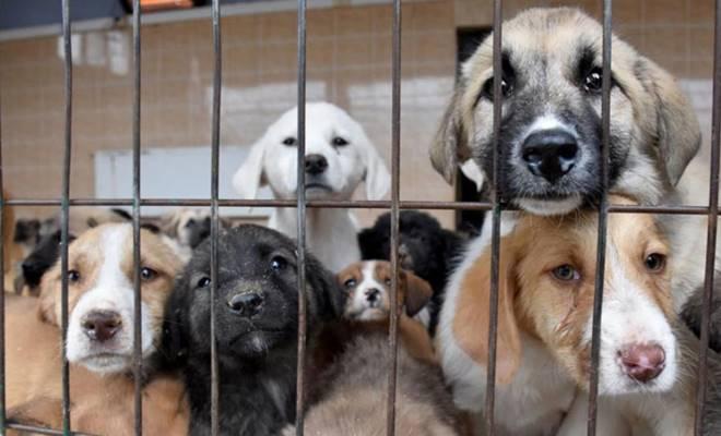 Hayvanları Koruma Kanunu çıktı! –
